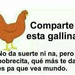 CompartelaAndaa Gallina kawaii suerte