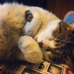 FreeToEdit cat pet
