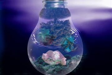 freetoedit remix underthewater lips flowers