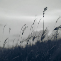 blackandwhite nature love photography landscape