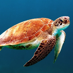 freetoedit water underwater turtle tortoise