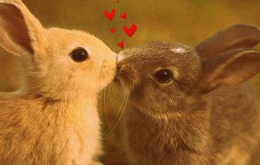 kiss bunnies love pets