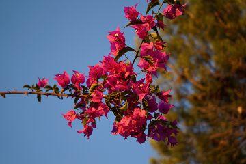 wppfloralcanvas flower love colorful summer