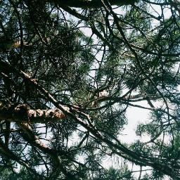 freetoedit green nature tree naturephotography