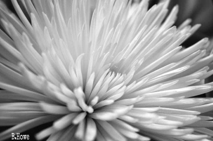 #flower,#blackandwhite,#photography,#nikond3200