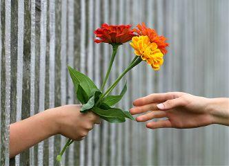 freetoedit hand hands human flower